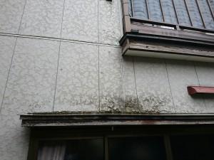 西区坂井東 渡辺様_3