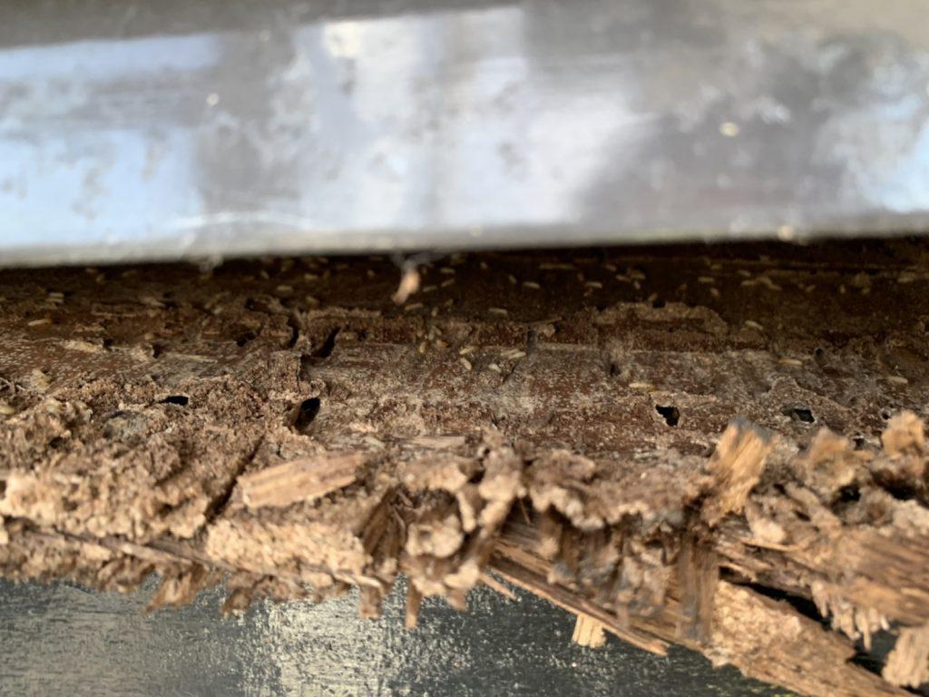 シロアリの群れの写真